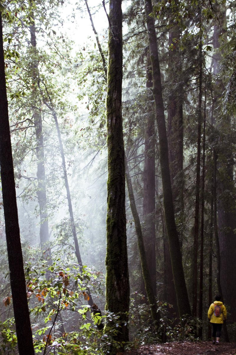 tumblr Deep inside the misty redwoods forest 5